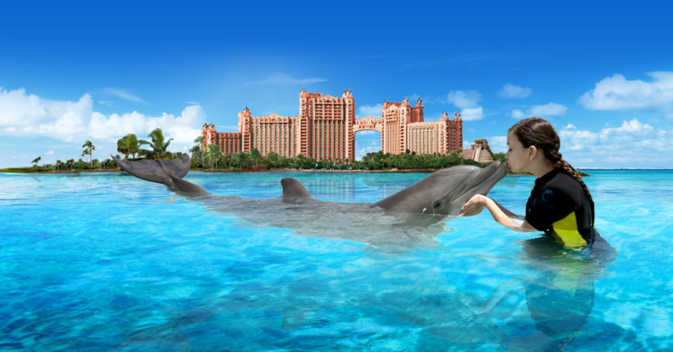 MarineHabitat_DolphinInteraction